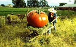 Назначение генной инженерии в сельском хозяйстве