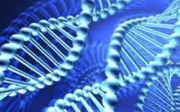 Генетический конструктор