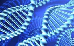 ДНК и их новые комбинации