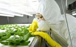 Извлекаем из ГМО пользу