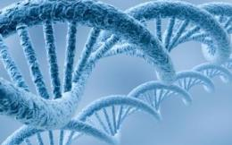 ДНК: конструирование рекомбинант