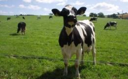 Генная инженерия в животноводстве