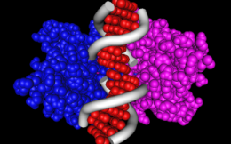 Немного о рестрикции ДНК