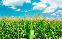 Генетика и энергия биомасс