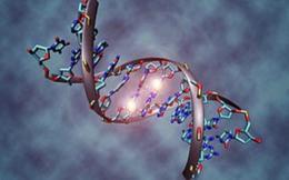 Генетический контроль генов