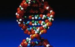 Комплекс ДНК и белков ученые могут сплести в клубки